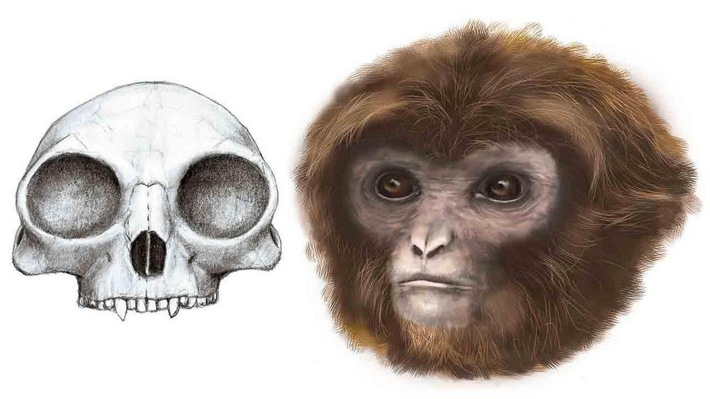 ancient humans 4