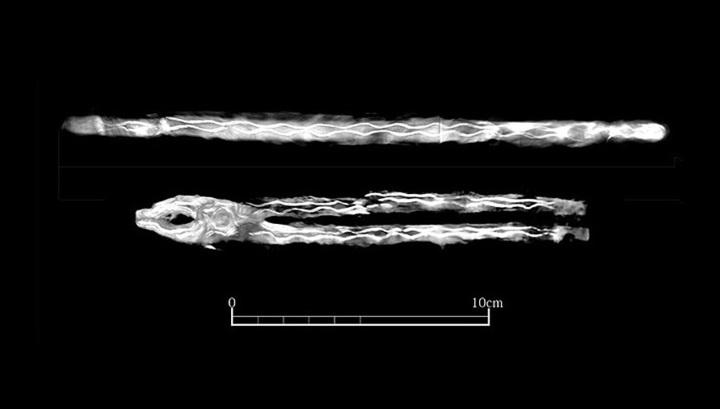 Рентгеновский снимок кузнечных инструментов, найденных в гробнице № 139