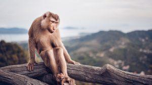 Monkey Обезьяна
